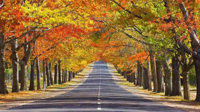 autumn-memorial_00299325.jpg